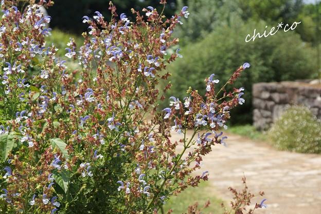 ソレイユの丘-083