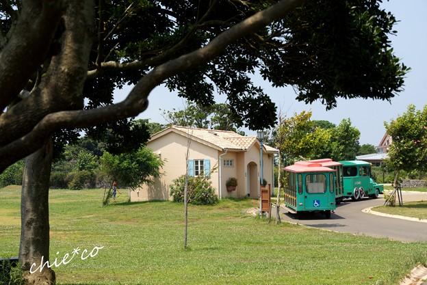 ソレイユの丘-137