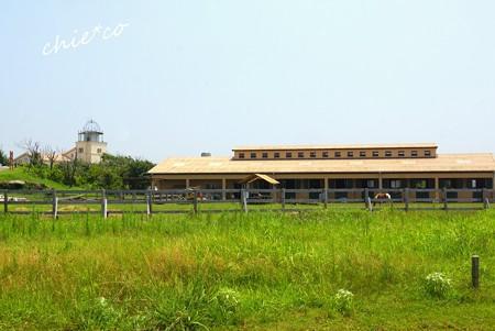 ソレイユの丘-154