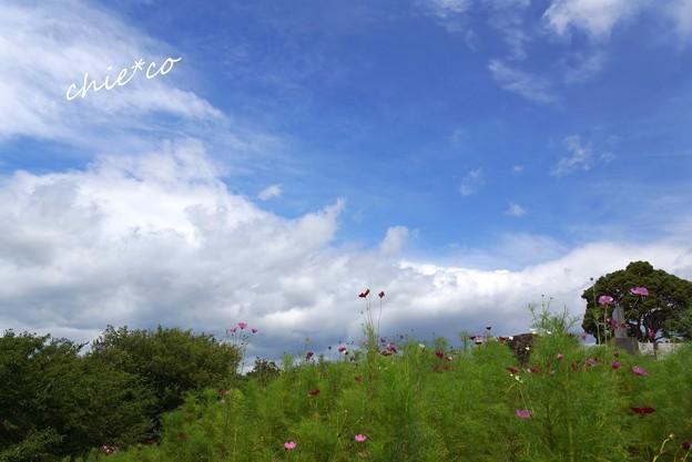 吾妻山公園-078