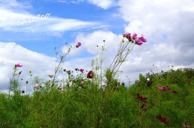 吾妻山公園-103