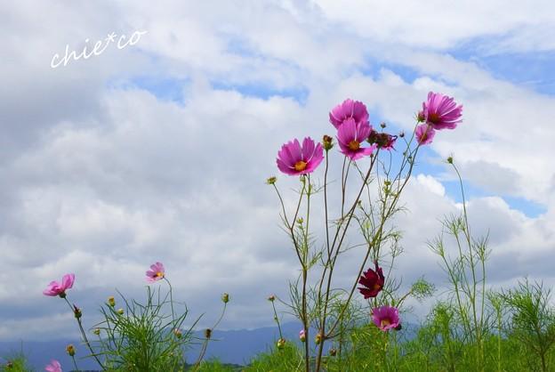 吾妻山公園-105