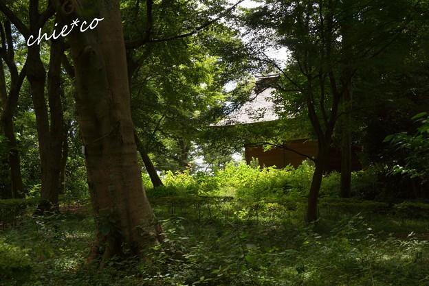 吾妻山公園-033