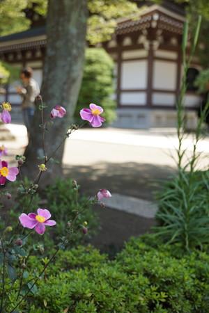 長月の円覚寺-049