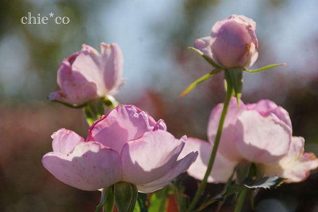 花菜ガーデン-263