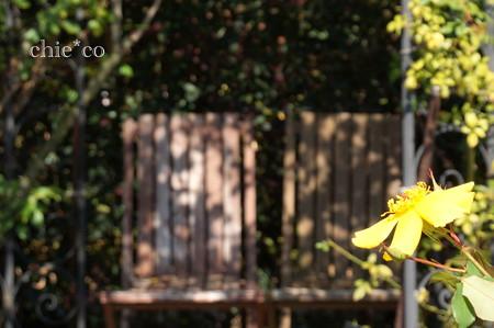 花菜ガーデン-264