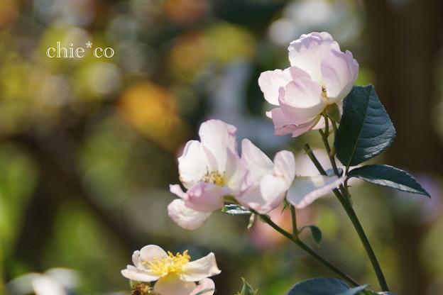 花菜ガーデン-265