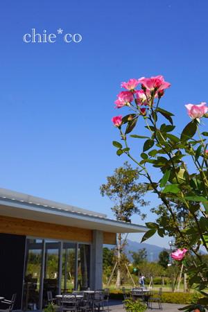 花菜ガーデン-271