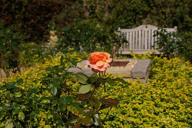 花菜ガーデン-066