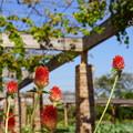 写真: 花菜ガーデン-322