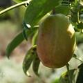 写真: 花菜ガーデン-324