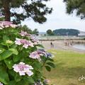 八景島-326