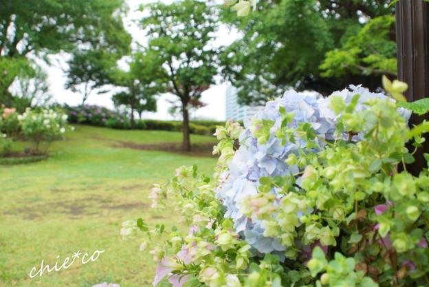 横浜山手-327