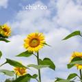 写真: DSC07053-001