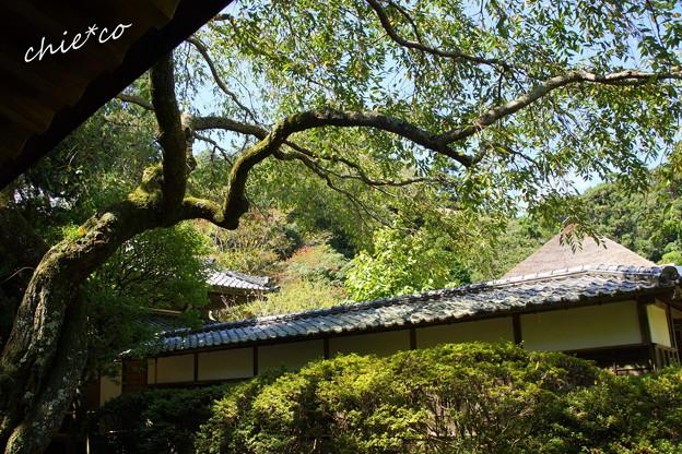 北鎌倉-380