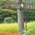 Photos: 日向薬師-299