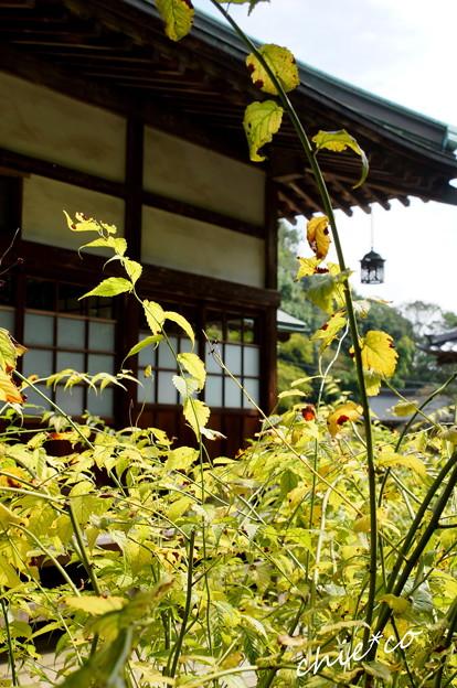 鎌倉-291