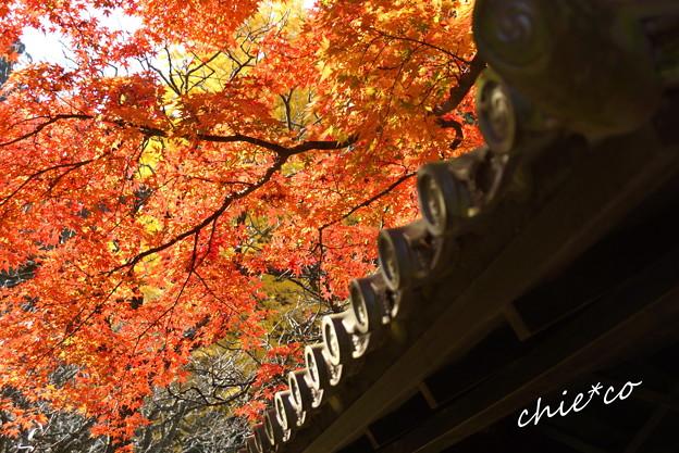 北鎌倉-326