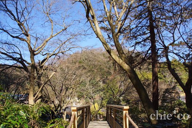 初春の鎌倉-249