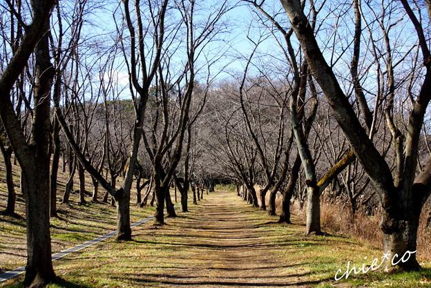 久良岐公園-115