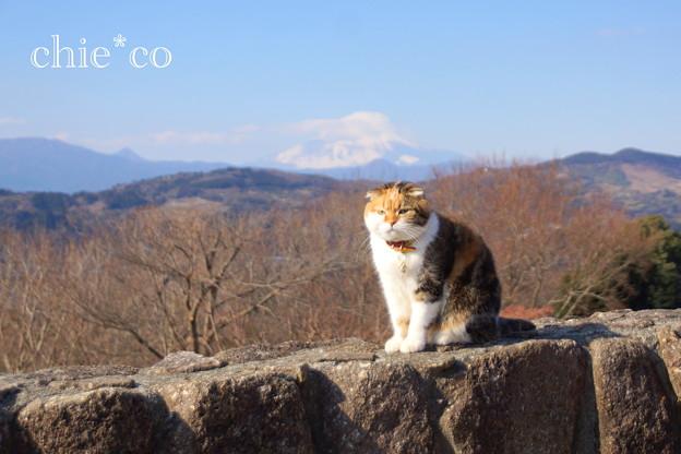 吾妻山公園-252