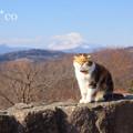写真: 吾妻山公園-252