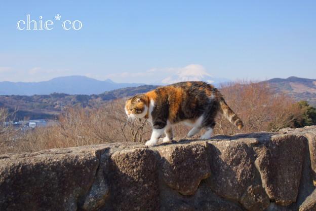 写真: 吾妻山公園-254