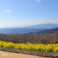写真: 吾妻山公園-255