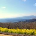 写真: 吾妻山公園-259