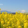 写真: 吾妻山公園-269
