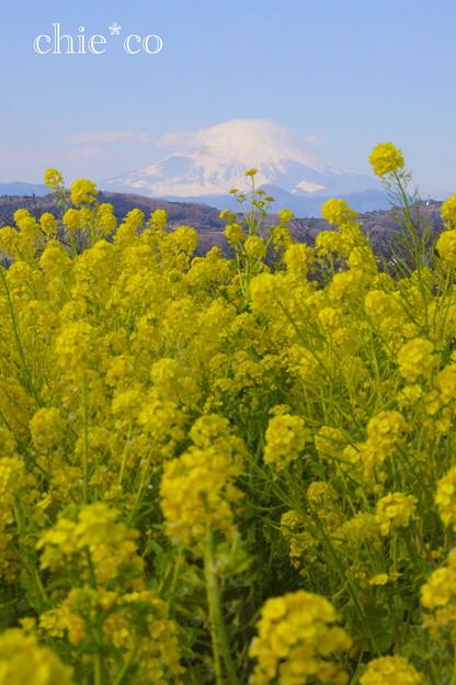 写真: 吾妻山公園-273