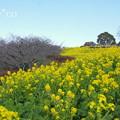 写真: 吾妻山公園-277