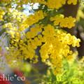 写真: 吾妻山公園-283