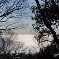 写真: 吾妻山公園-308