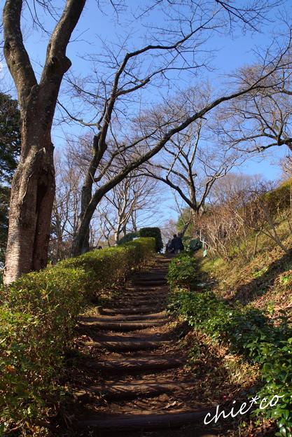 吾妻山公園-309