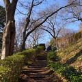 写真: 吾妻山公園-309
