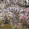 写真: 長谷寺-188