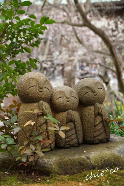 写真: 長谷寺-191