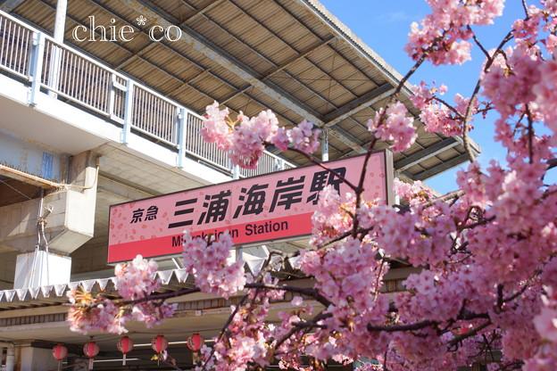 写真: 三浦海岸-189