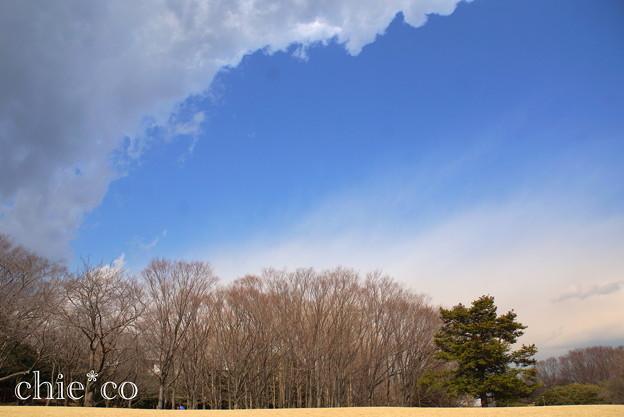 写真: 横浜根岸森林公園-133