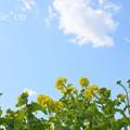 写真: 横浜根岸森林公園-139