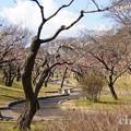 写真: 横浜根岸森林公園-143