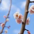 写真: 横浜根岸森林公園-161