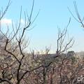 写真: 横浜根岸森林公園-168