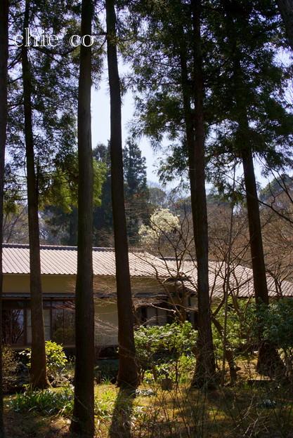 写真: 久良岐公園~6