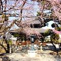 写真: 鎌倉-295
