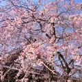 写真: 鎌倉-296