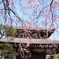 写真: 鎌倉-301