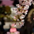 写真: 鎌倉-308