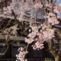 写真: 鎌倉-303